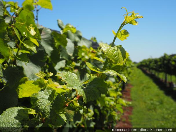 Bodega Costa & Pampa - A Unique Winery in Argentina